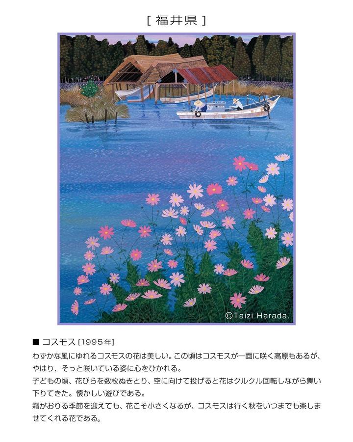 23_福井県_コスモス.jpg